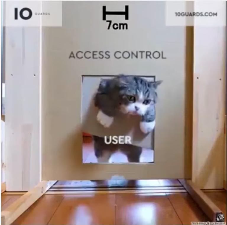 Katzenvideos, die abstrakte Inhalte bildhaft und mit einem Augenzwinkern darstellen.